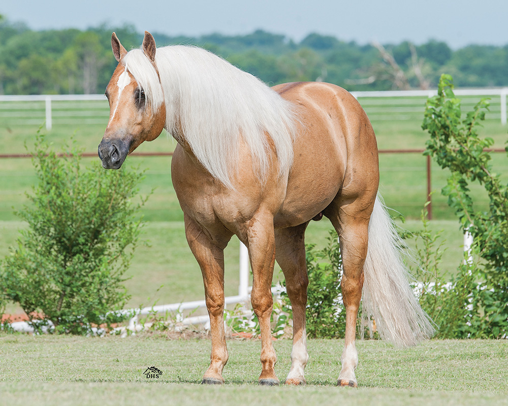 """Shiners Voodoo Dr"" Reaches Million Dollar Sire Milestone (© NRHA)"