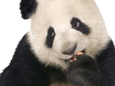 Cute panda, isn't it?