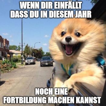 Meme mit Hund, Text Fortbildung; Bild: bildmachen-Memefabrik/ufuq.de