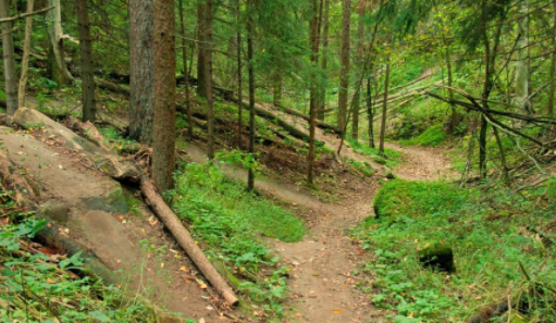 the hydrocut mountain bike trails