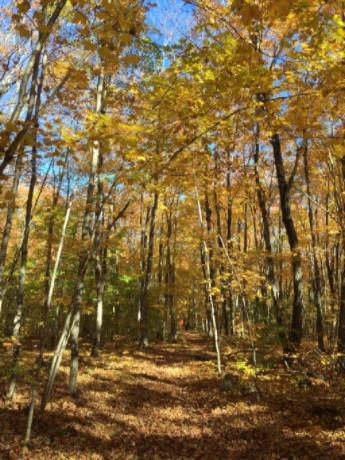 manitouwaning trails