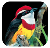 Birds of Peru icon