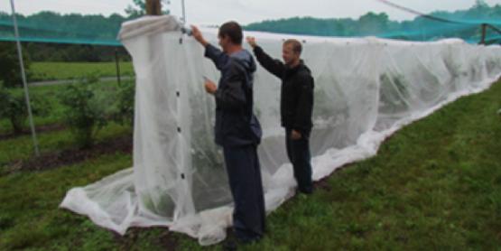 Exclusion Netting (Cornell, NE-SARE)