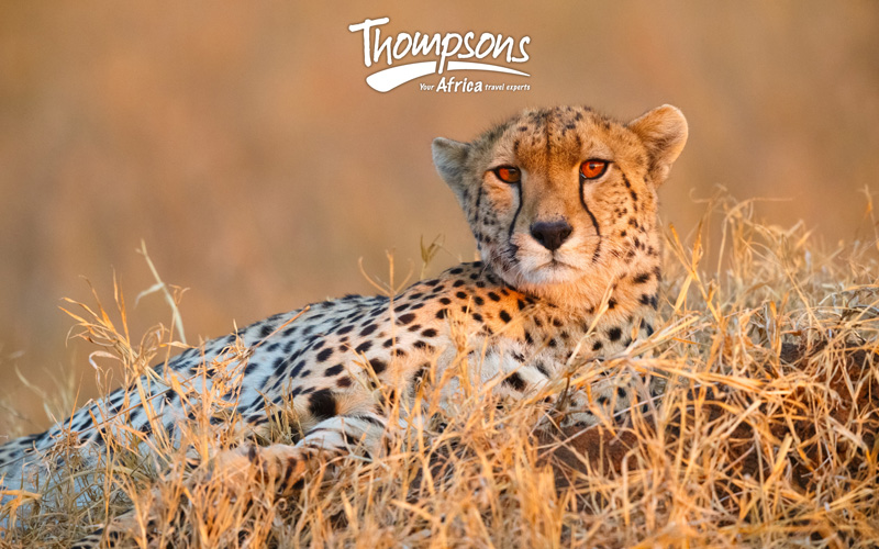 Thompsons Africa Online Tariff - Notification