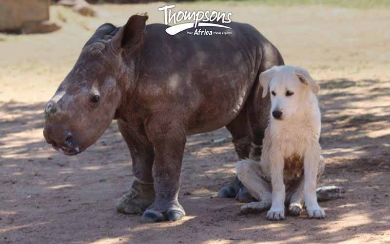 Meet our new adopted rhino…and our competition winner!