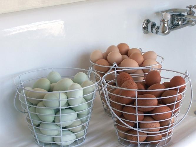 Egg CSA