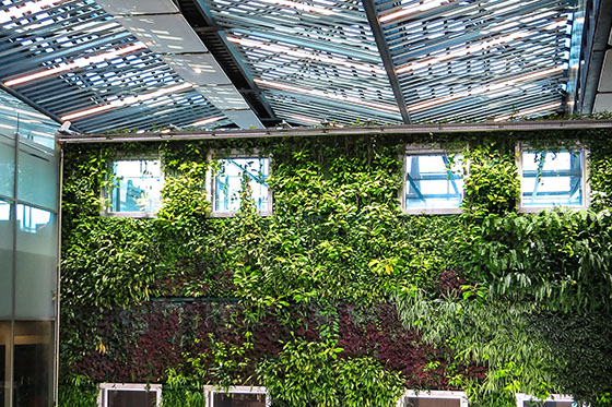 Inside space with a wall of plants/ Pexels/Magda Ehlers