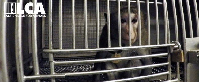 Newly Released Footage at ITR Exposes Cruel Neglect of Macaque Monkeys