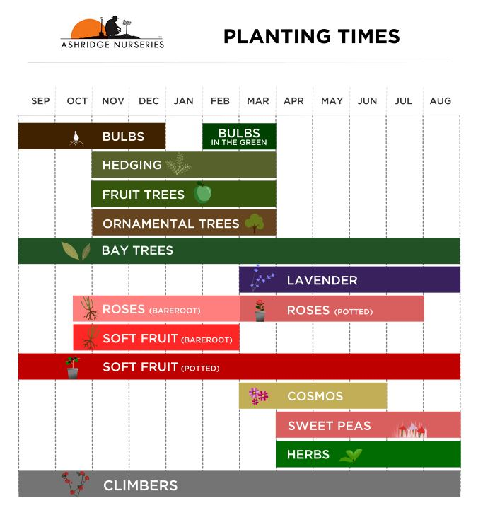 Planting Times