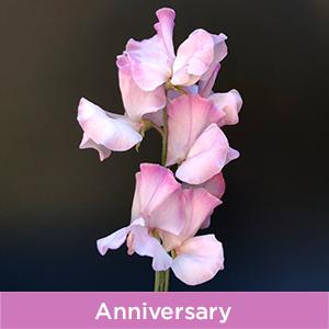 Anniversary Sweet Peas