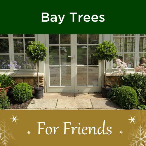 Bay Trees