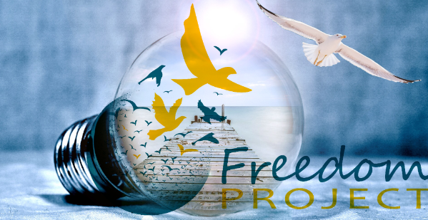 Birds from Freedom Project Logo curiously fly out of light bulb