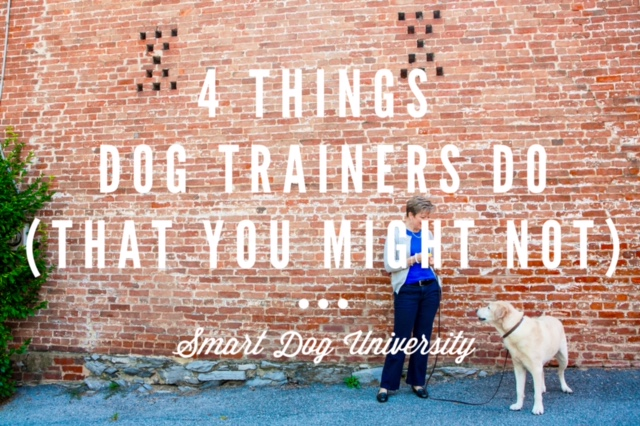 4 Things Dog Trainers Do (That You Might Not)