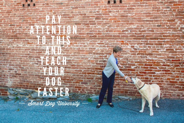 Pay Attention to THIS and Teach Your Dog Faster