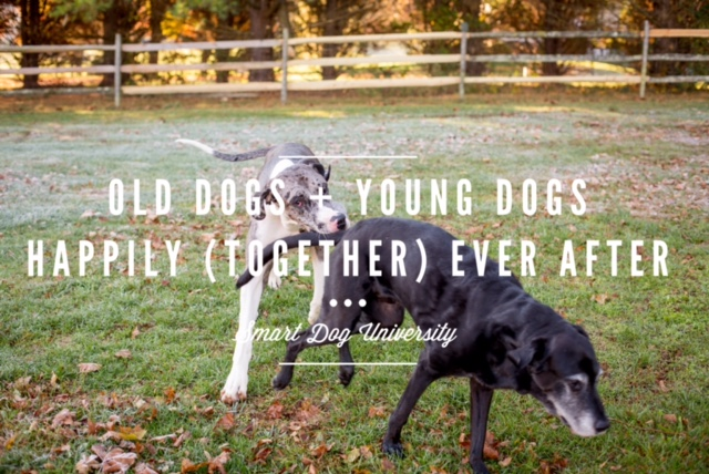 Old Dogs + Young Dogs