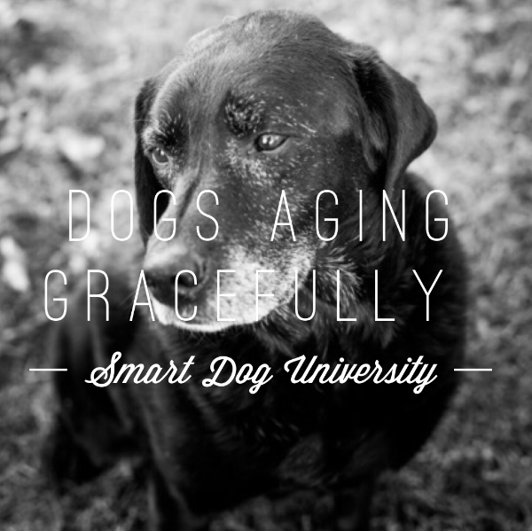 Aging Gracefully (Your Dog, Not You)