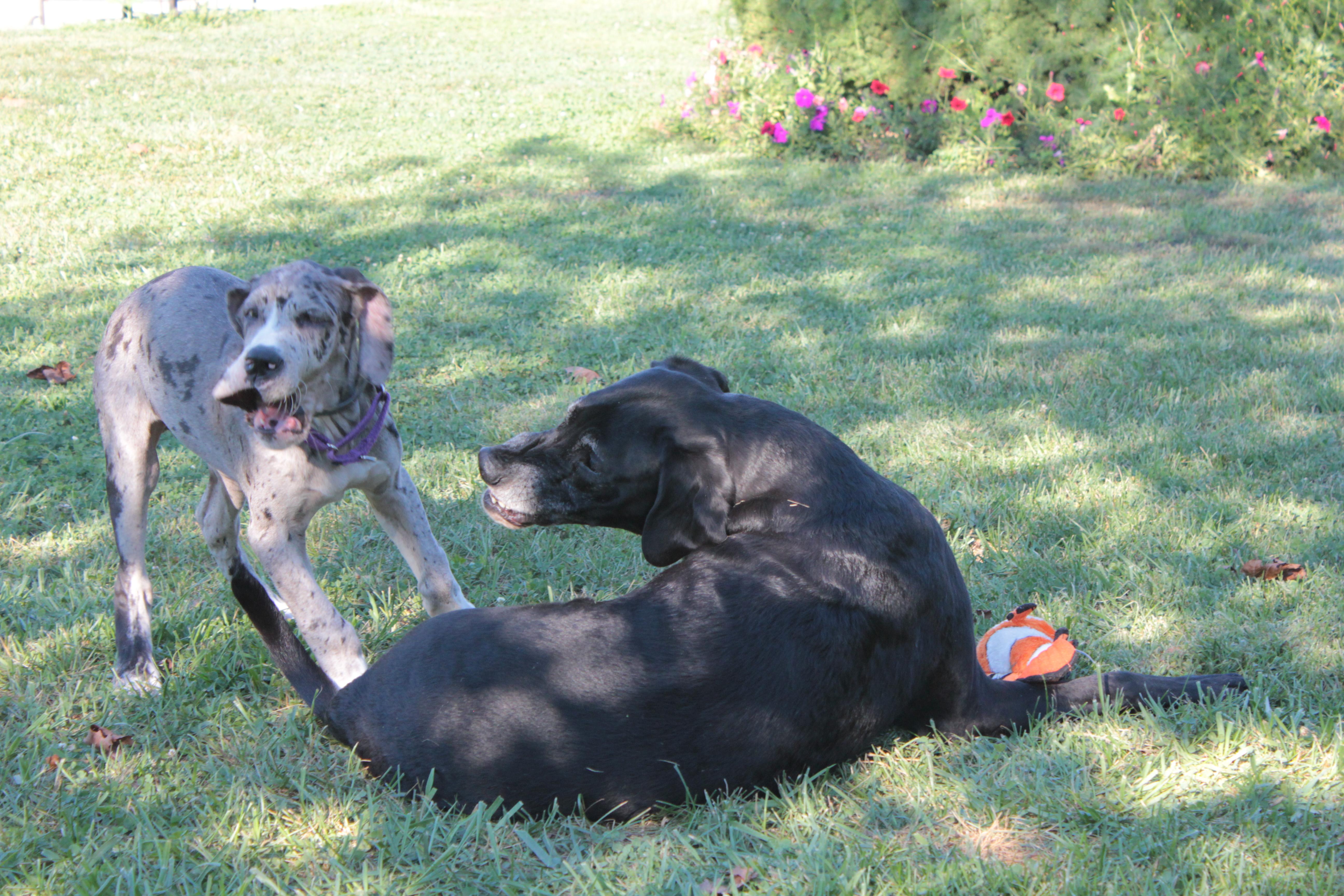 dog training, Smart Dog, dog obedience, Frederick, dog training, clicker, puppy training, puppy class, socialization, house training, potty training