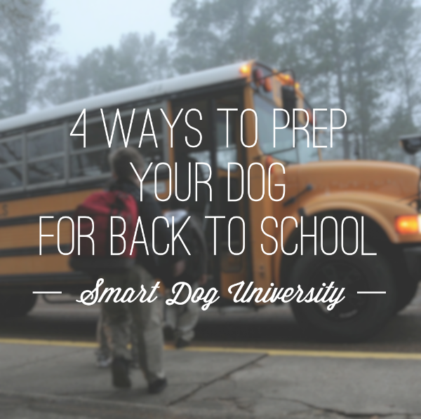 4 Ways to Prep Your Dog for Back to School