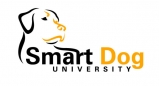 Smart Dog, Frederick, dog training, nose games, nose, dogs, games