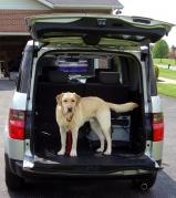 dog training, dog class, dog obedience, clicker, positive, Frederick, car safety, doggie seat belt