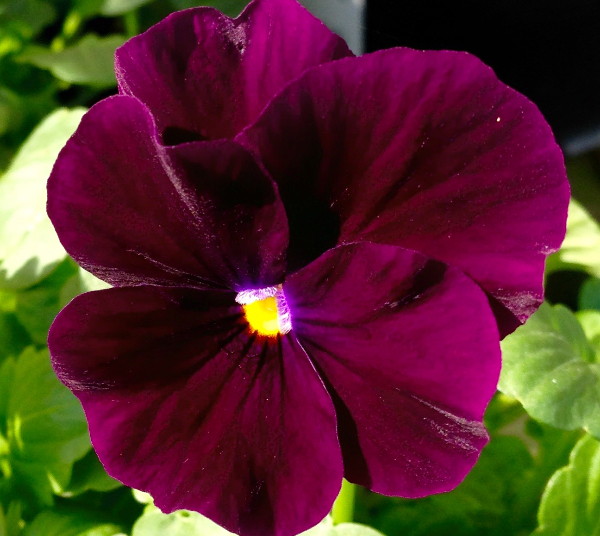 Lovely winter flowering annuals available