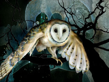 """Jeannine Chapell, """"Barn Owl"""". Digital Image."""