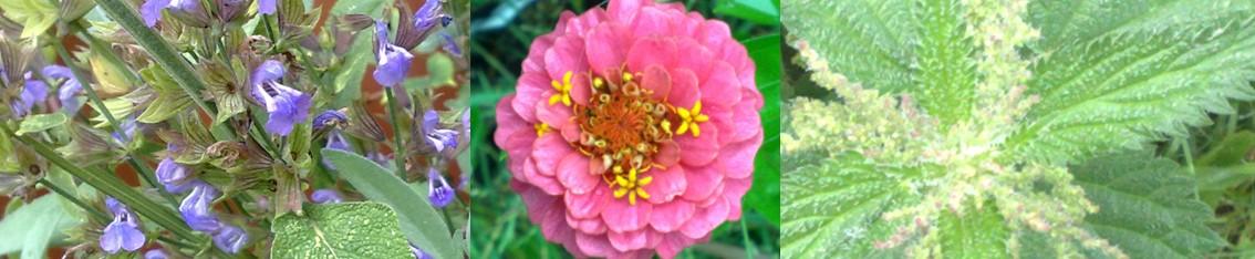 Blommande relationer helgkurs
