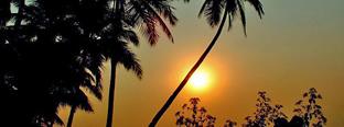 Goa shapora river med palmer