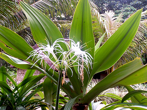Plants at Mele Cascades