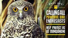 Bundanon Owls