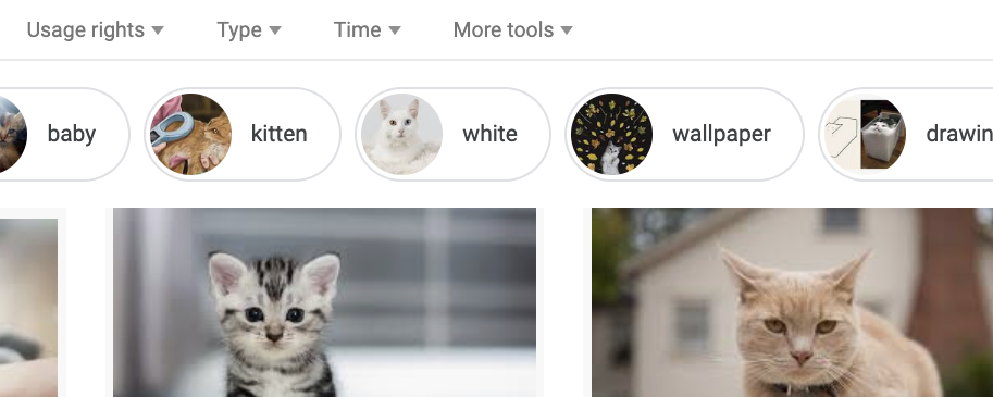 searching for cat images