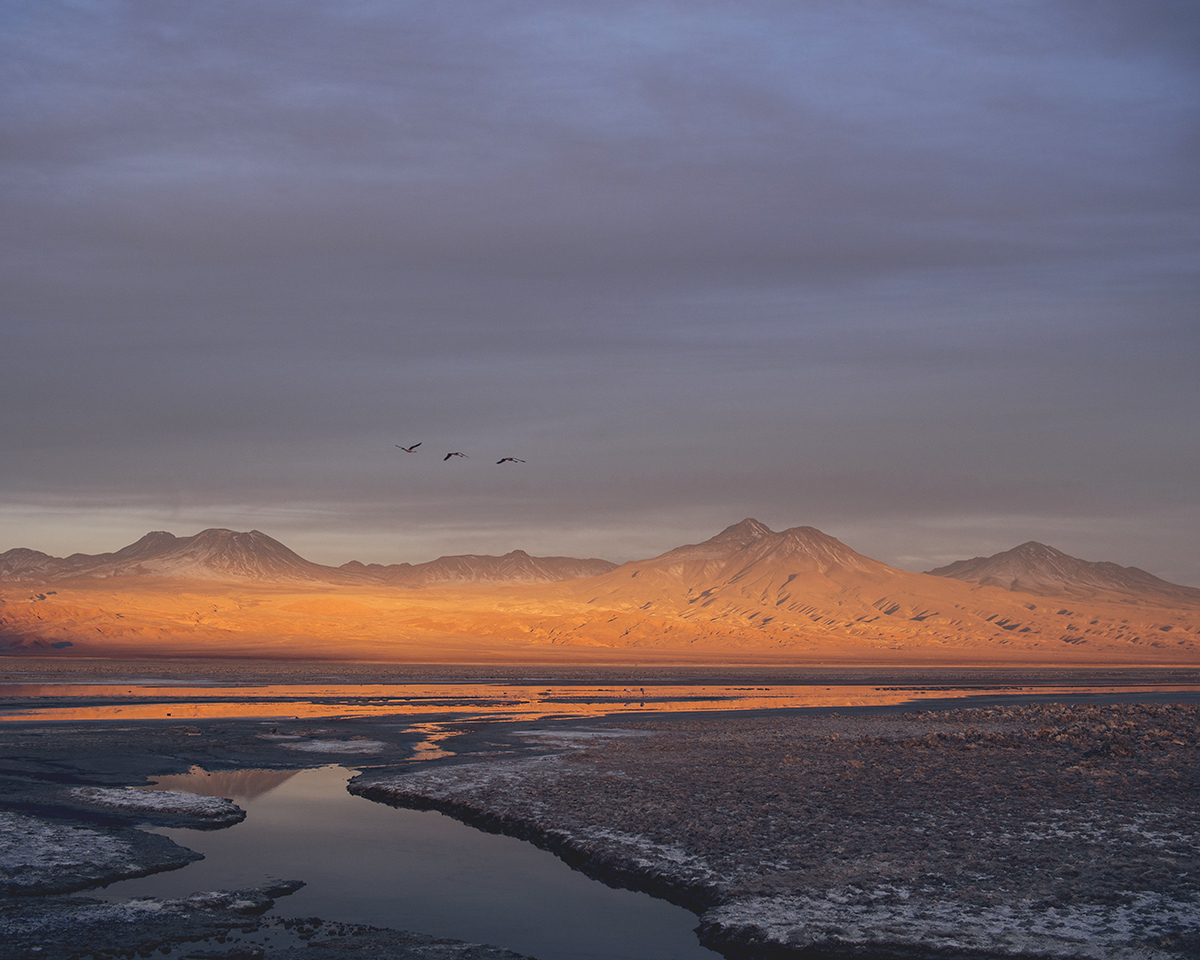 RAD AND HUNGRY: Flamingo Reserve 4, San Pedro Atacama