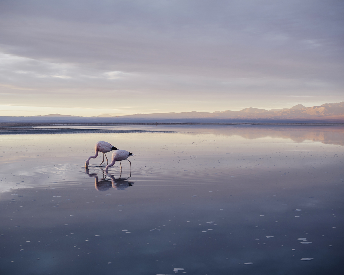 RAD AND HUNGRY: Flamingo Reserve 2, San Pedro Atacama
