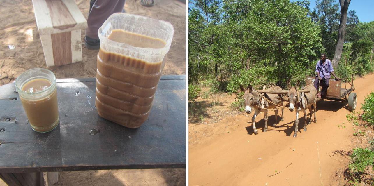 RAD AND HUNGRY: Maunga Village 3