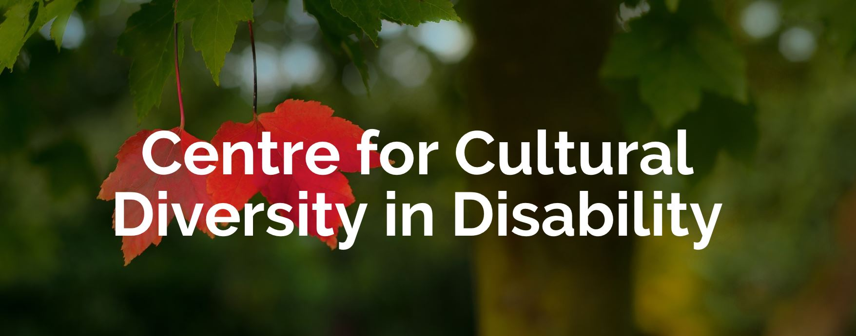 Image description: Text reads Centre for Cultural Diversity in Disability. Tree leaves in background behind.