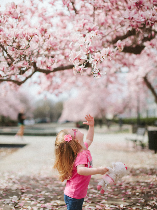 Little Girl with Cherry Blossoms