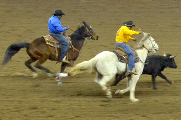 A trip to the National Western Stock Show & MLK, Jr. Rodeo