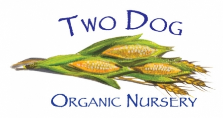 Two Dog Organic Nursery
