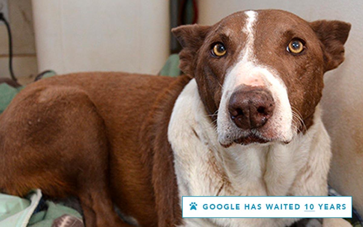 Google has waited 10 years!