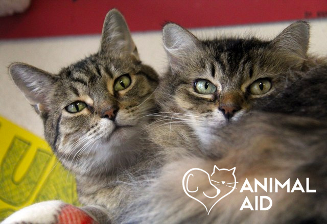 Core Paws Partners with Animal Aid