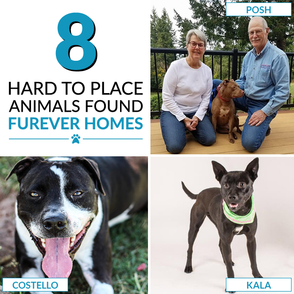 8 Hard to Place Animals Found Furrever Homes