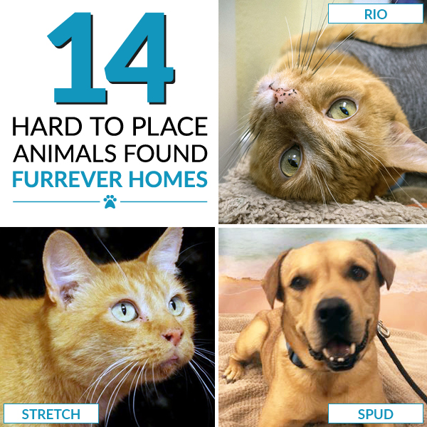 April Adoption Counter: 14 hard to place animals found furrever homes!