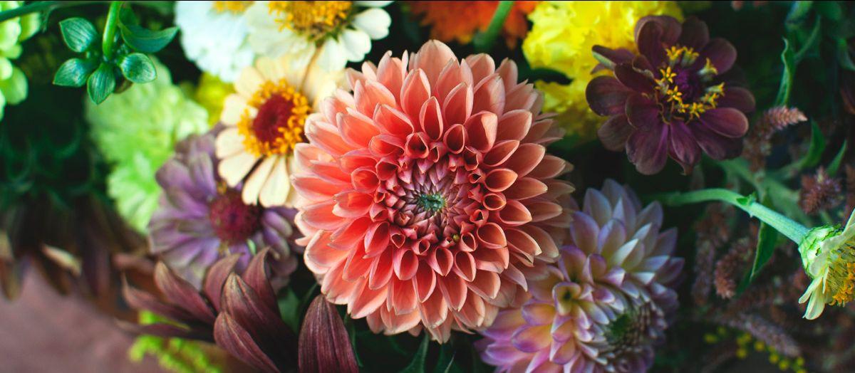 colorful dahlia bouquet with large orange dahlia Jowey Linda