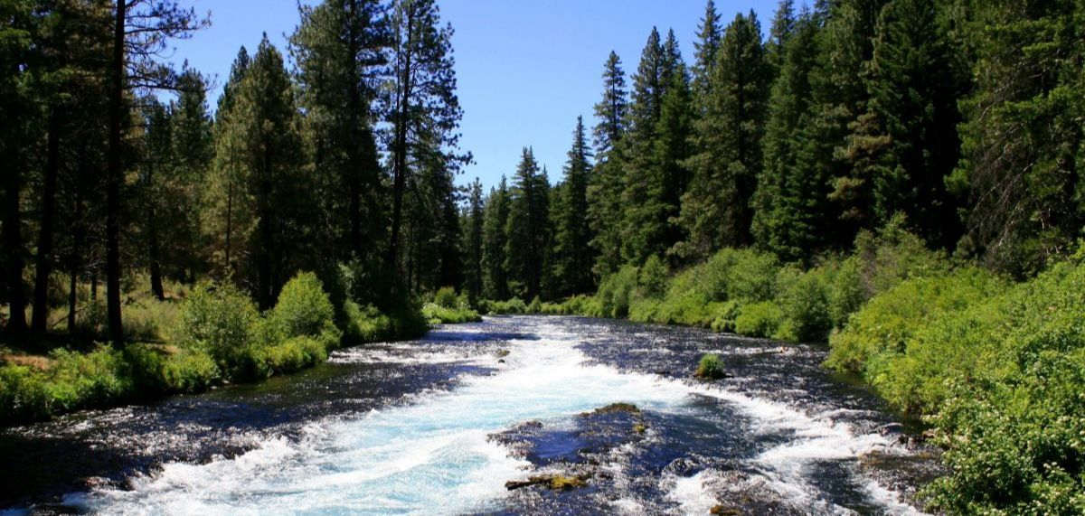 The Metolius River in Central Oregon flowing through an evergreen forest during a sunny day.