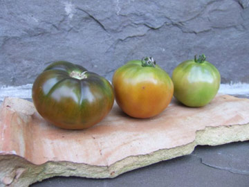 three tomatoes of varied ripeness in a row