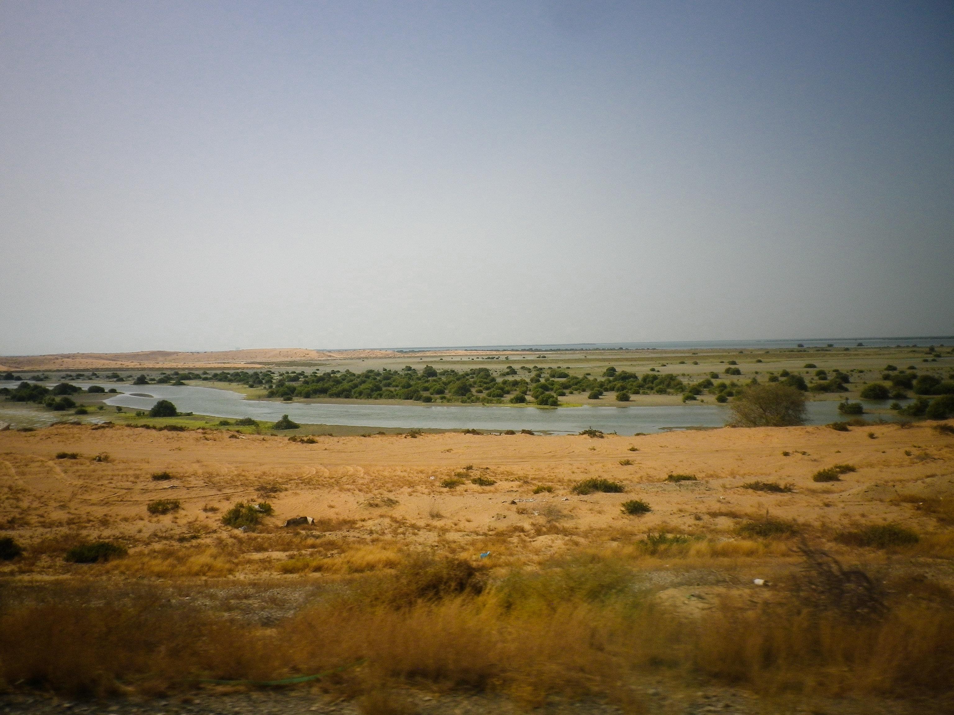 Marsh in Umm al Quwain