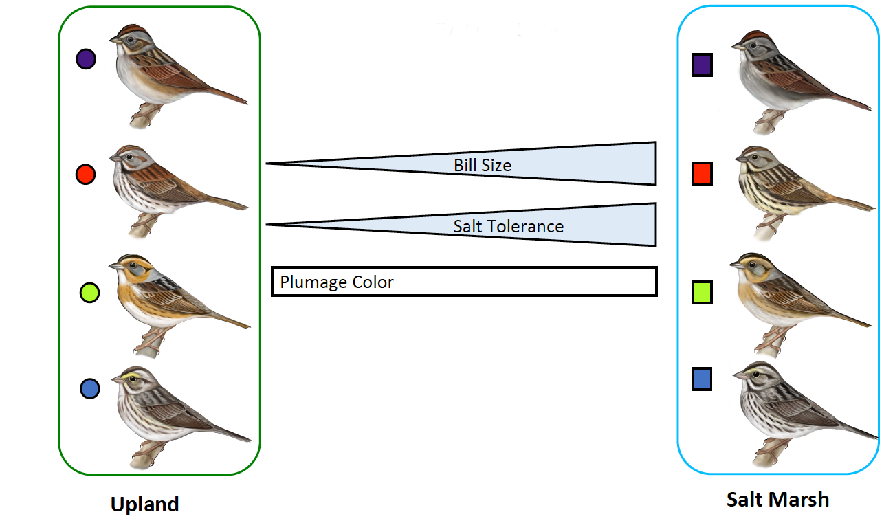 Sparrow graphic