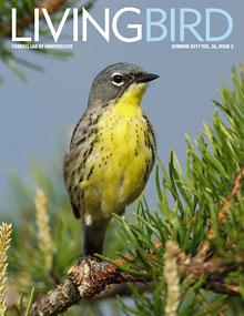 Living Bird magazine