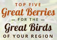 Top five berries for your region