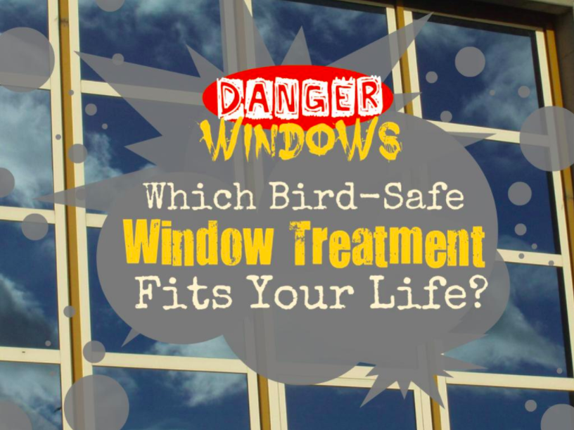 Window Quiz Title Page